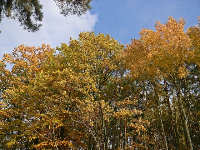 jesienne krajobrazy, przyroda, drzewa