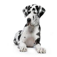raza canina más grande de la historia