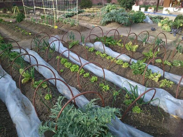 Ideas de dise o de jardiner a en el retiro y las rozas for Jardineria las rozas