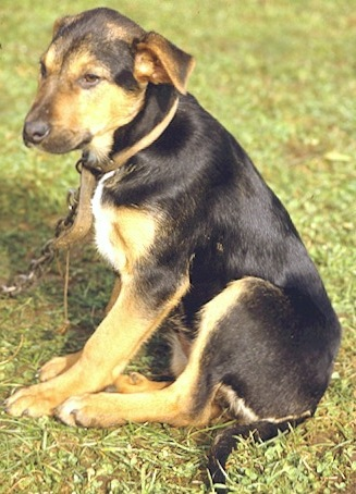Image Result For Can Dog Predict