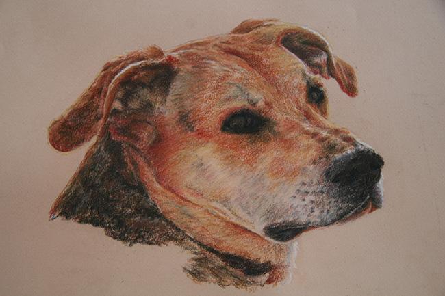 Retrato de un perro de lado mestizo