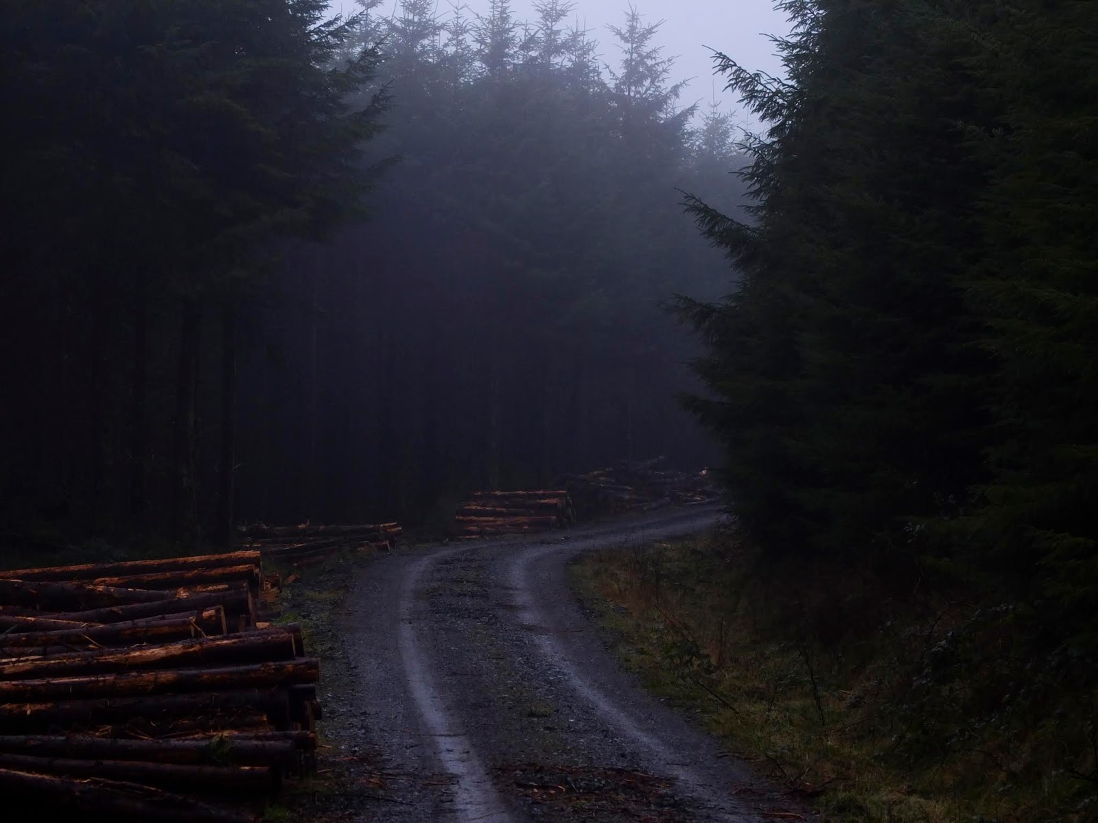 A curved road in the forest with cut logs on one side in the fog.