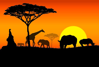 Africa At Night
