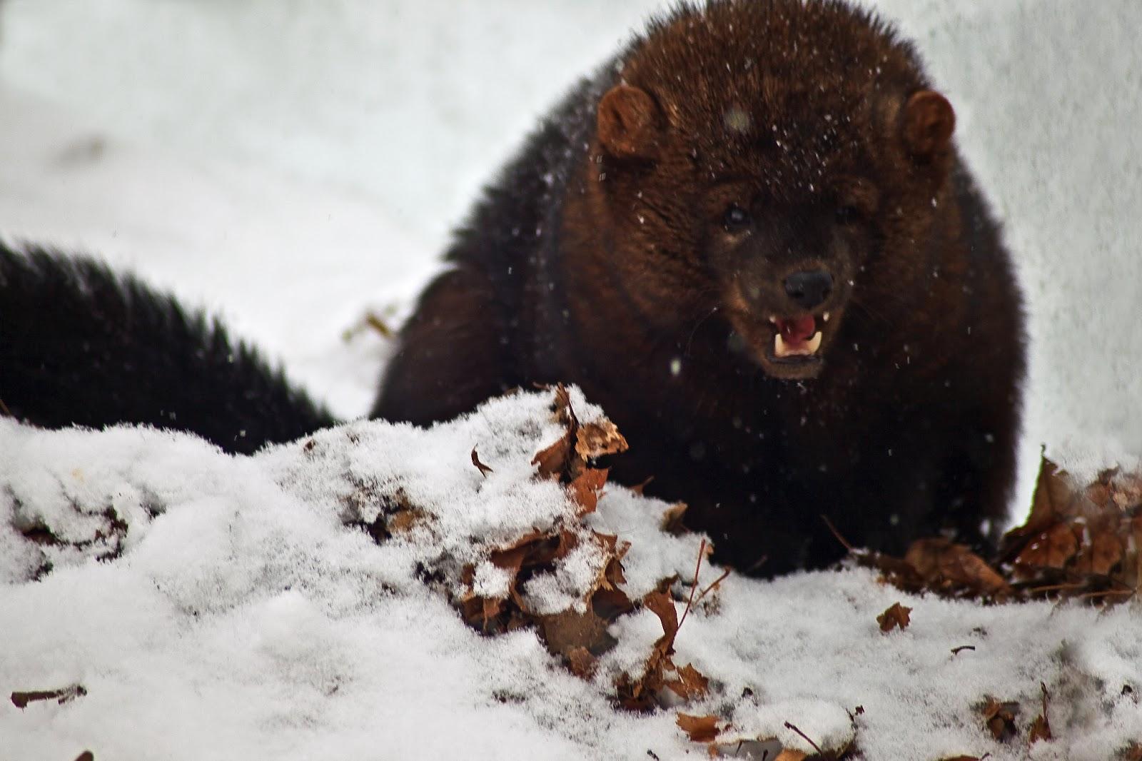 Tutti gli sfondi HD Animali selvaggi Immagini e foto-8224