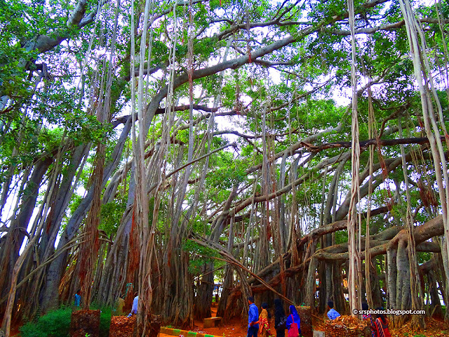 Under the Big Banyan Tree, Bangalore