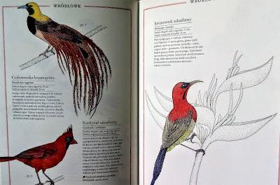 ilustrowany inwentarz ptaków zakamarki recenzja