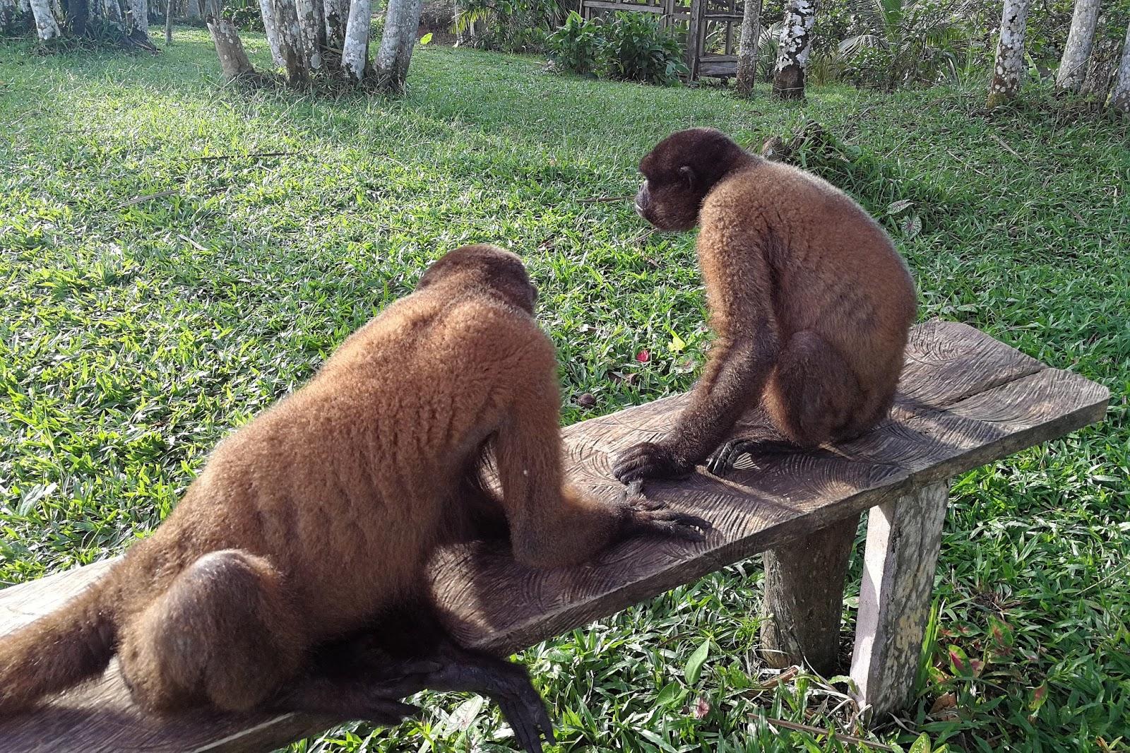 Monos Selva