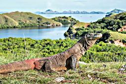 10 Fakta Menarik Tempat Wisata di Pulau Komodo