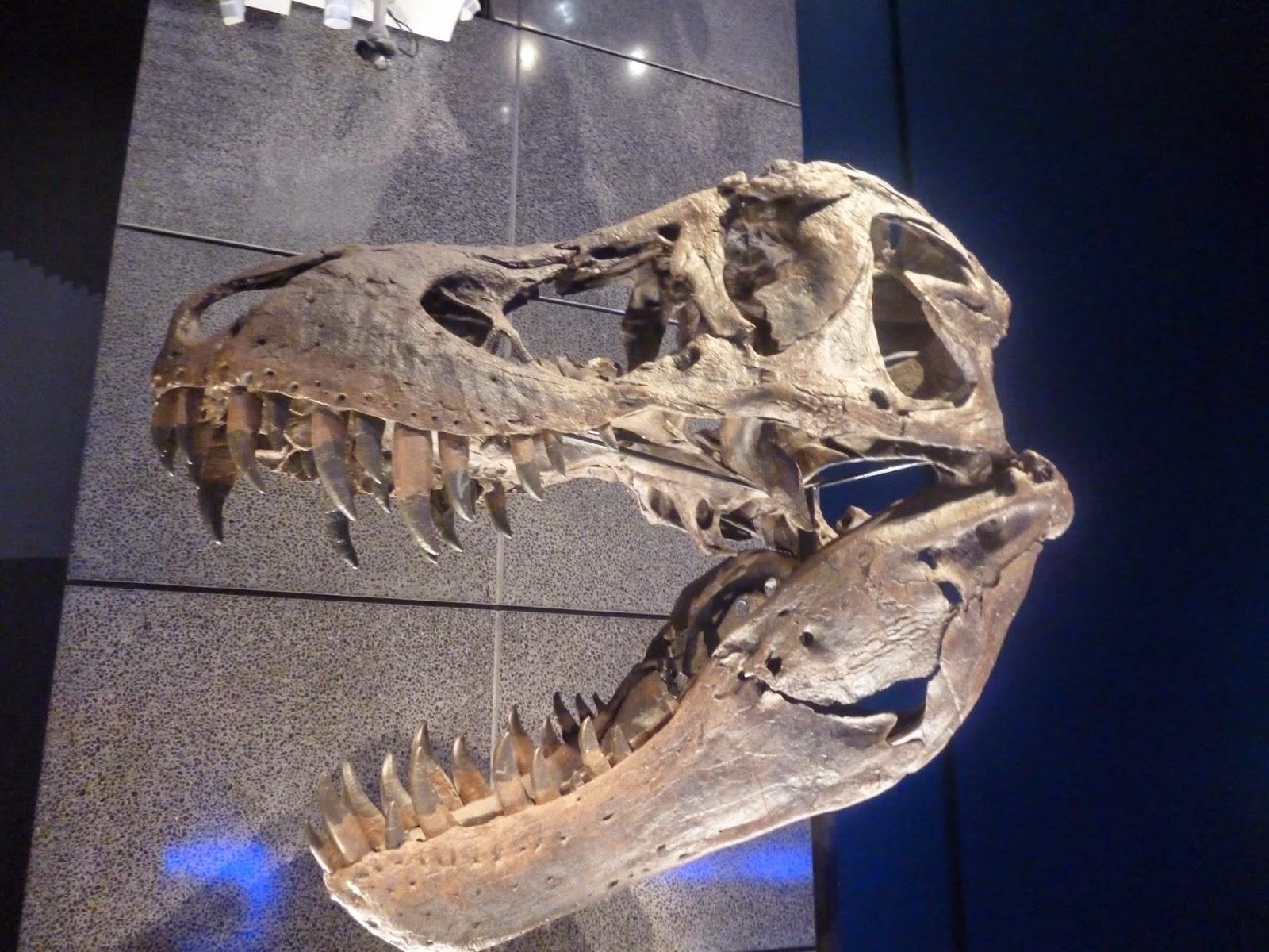 Carbon 14 in Dinosaur bones - Scientific Evidence - The BioLogos Forum