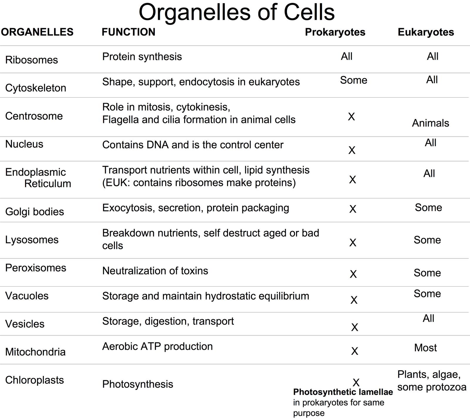 Biolojoy The Cell