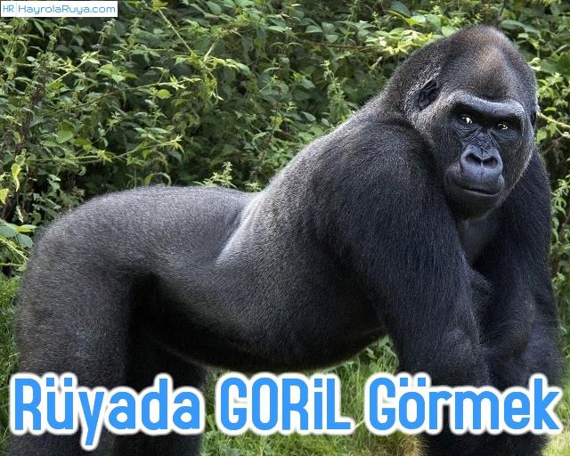 Rüyada Gorilin Görülmesi dini ve islami tabiri nedir? Rüyasının yorumları nelerdir?