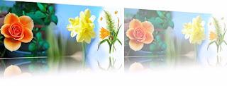 9 Gambar Bunga  Menawan Untuk Cover Facebook Terbaru