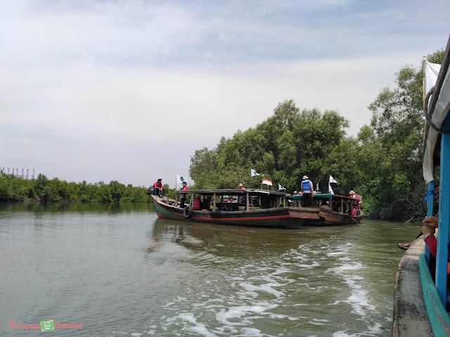 tur mangrove belawan