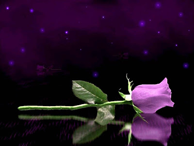 Purple Rose Normal Resolution HD Wallpaper 5