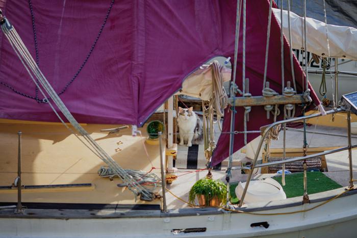 cat on boat brisbane