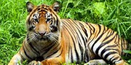 Fauna di Taman Nasional Sembilang
