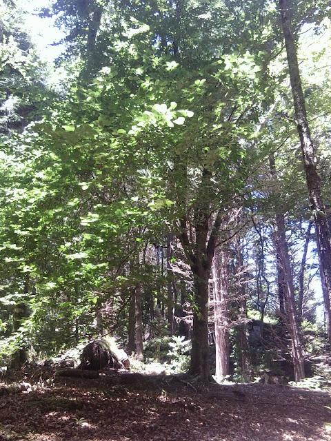 fotografias da natureza ilha da madeira