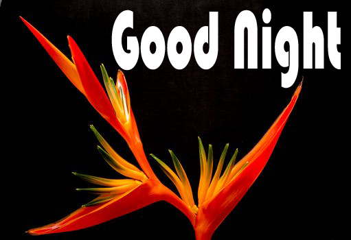 Good Night Wishes With Flower