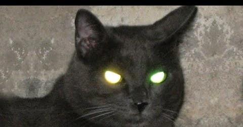 رؤيه قطه سوداء في المنام