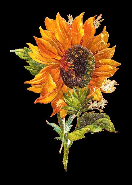 http://2.bp.blogspot.com/-LI1K5BEYGHQ/UjOaLSH2uBI/AAAAAAAAQ40/wZMXFWf8T2w/s1600/sun_flower_2png.png