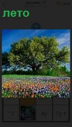 наступило лето, расцвели цветы и деревья зеленеют