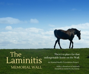 Laminitis Memorial Wall hosted by AHF