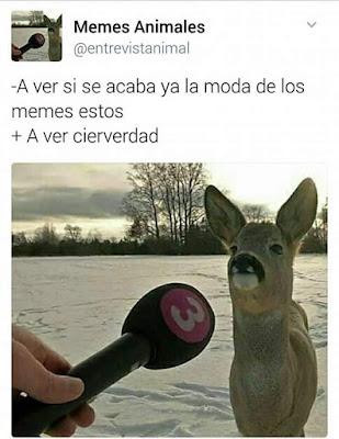 ciervo, meme