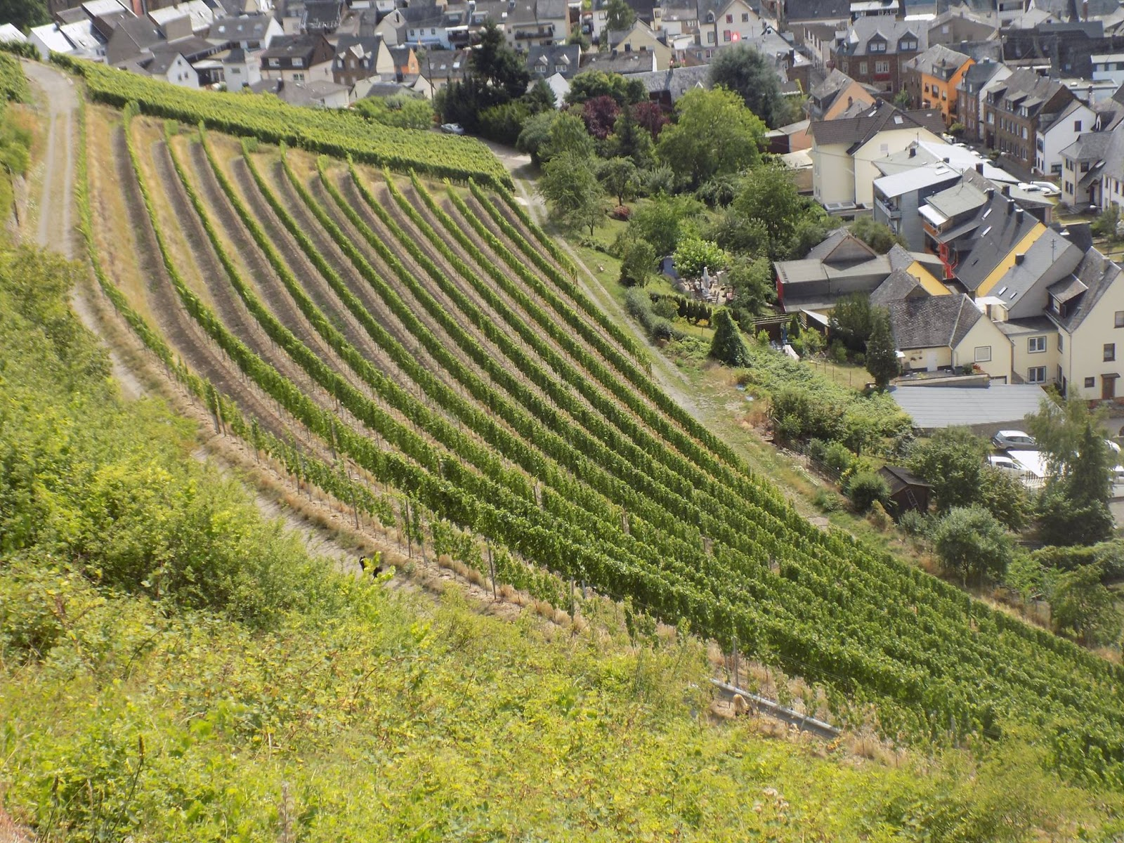 we just wandered up towards the vines in search of pathways that would take us to the top where we saw a huge cross on a hill in the landscape
