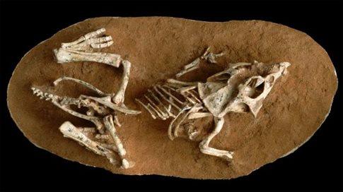 Τα αβγά των δεινοσαύρων έκαναν πολυυύ καιρό να εκκολαφθούν