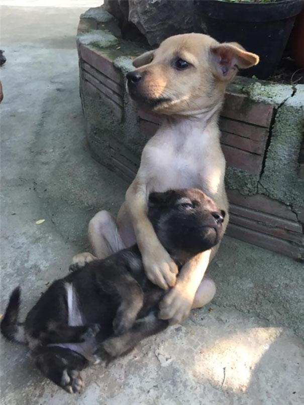 El abrazo de dos cachorros abandonados.