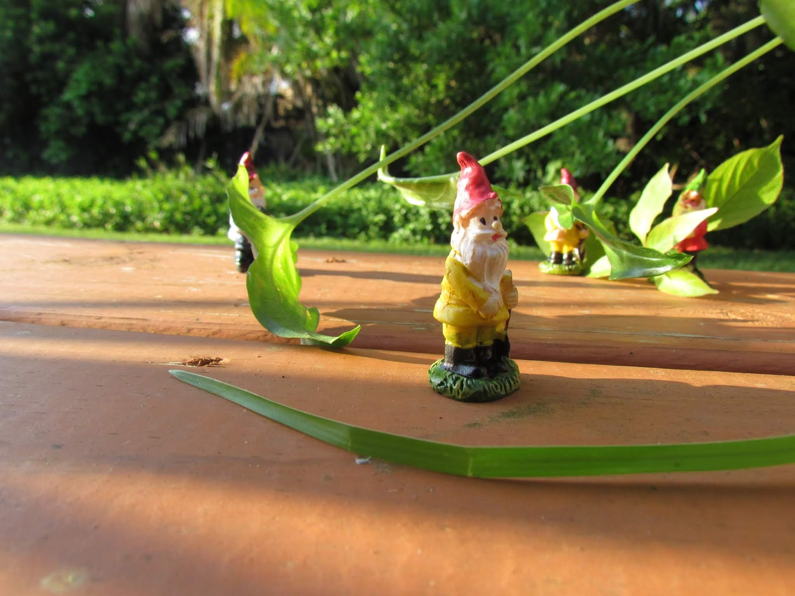 Gnome Figurine in Yellow With Red Hat + Houseplants in the Backyard Patio and Florida Room