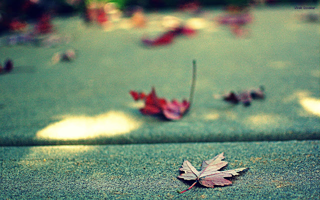Leaves on pavement