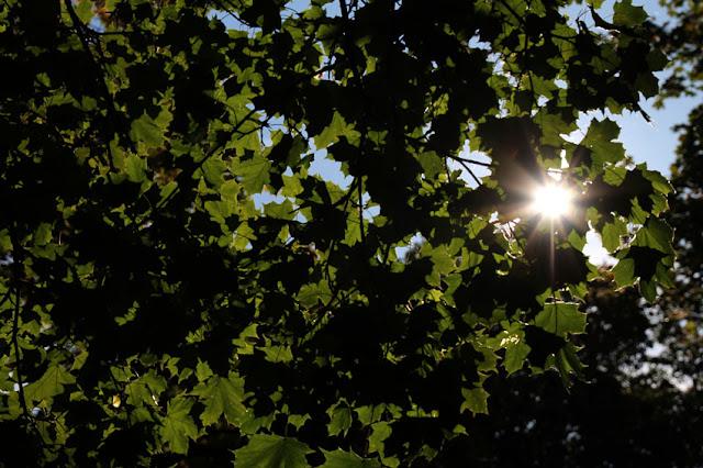 Sonne scheint durch grüne Blätter hindurch