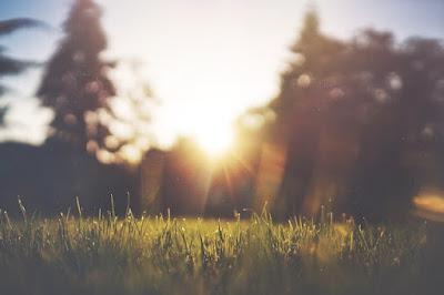 Pelouse sous le soleil.