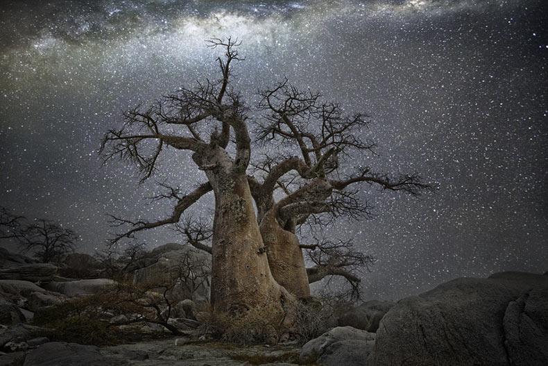 Diamond Nights: Los árboles mas antiguos de África fotografiado contra los cielos de noche estrellada