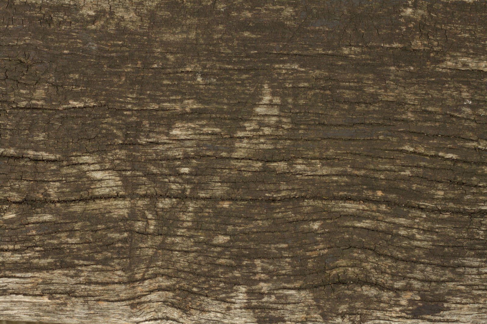 Wood dry cracked bench plank tree bark texture ver 14