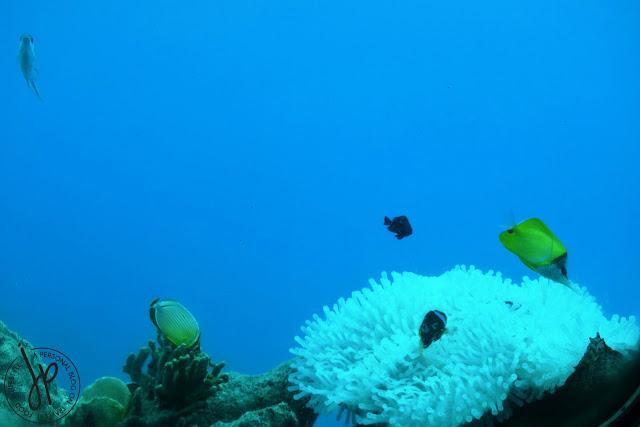 fishes, corals, ocean