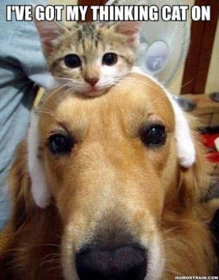 Funny dog pictures ; Me and the cat?