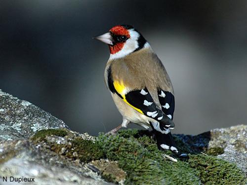 l 39 essentiel selon phil attirer les oiseaux dans son jardin. Black Bedroom Furniture Sets. Home Design Ideas