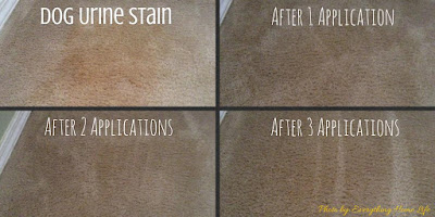 Best Pet Stain remover