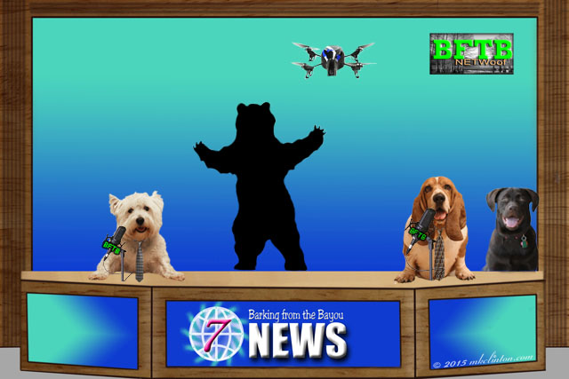 News screen with two dog reporters with photo of bear and drone