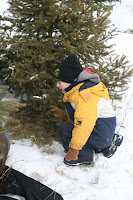 Helping cut our first own-cut Christmas Tree