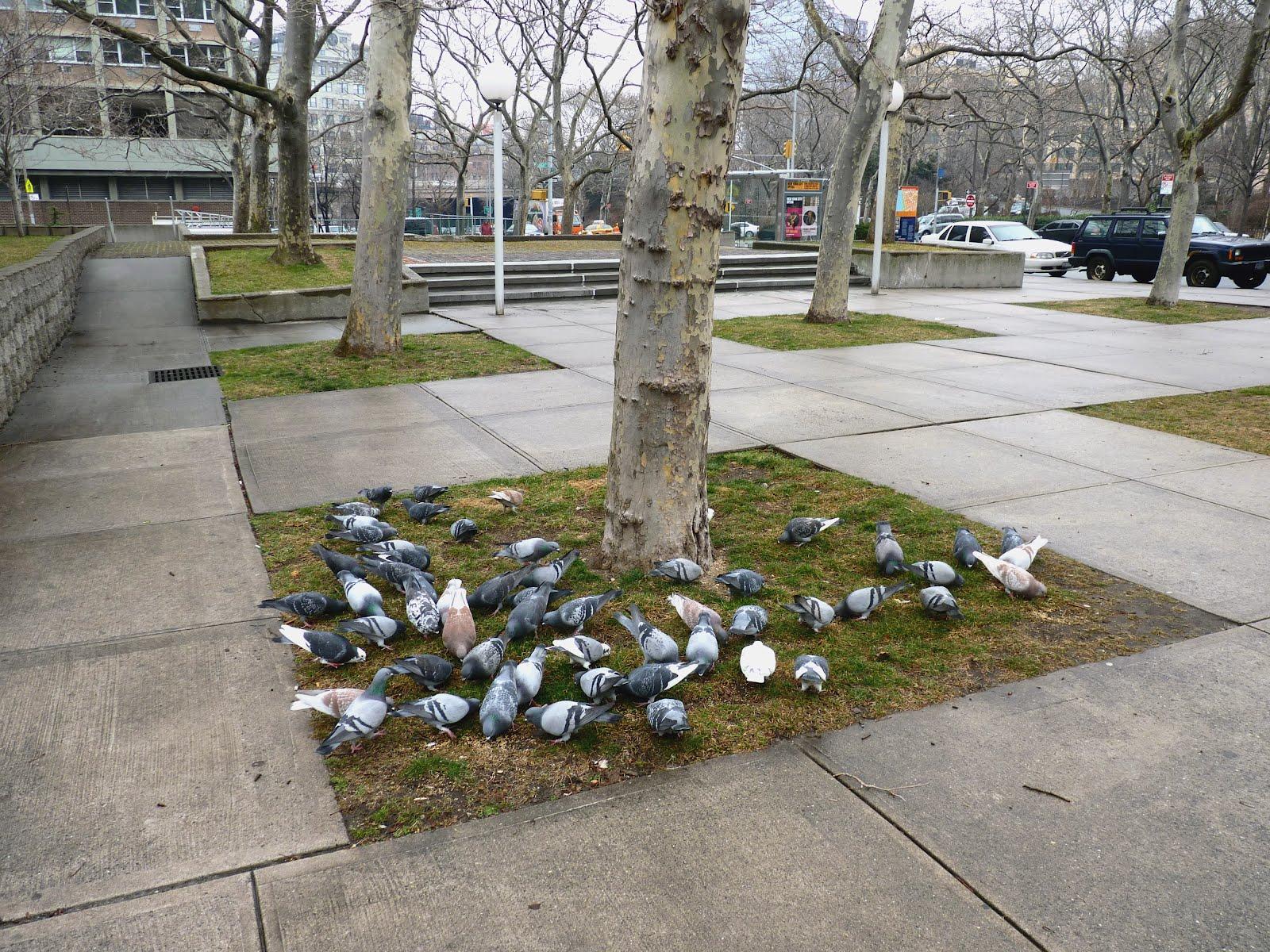 168c371725 Birds Agree: The Best Plot in Brooklyn