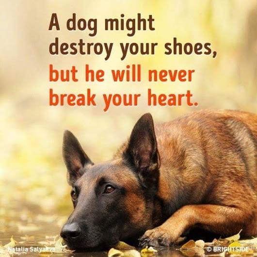 Many Tears Dog Rescue Centre Carmarthen