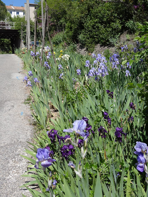 avril, jardin fébrile - Page 7 DSC07128