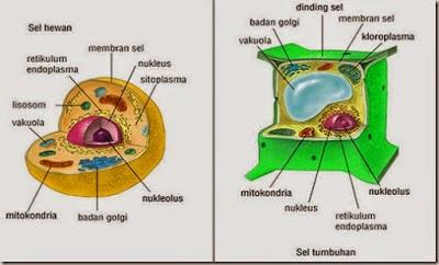 Perbedaaannya sel tumbuhan dan sel hewan