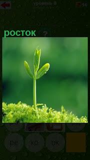 вырос зеленый росток из почвы с лепестками