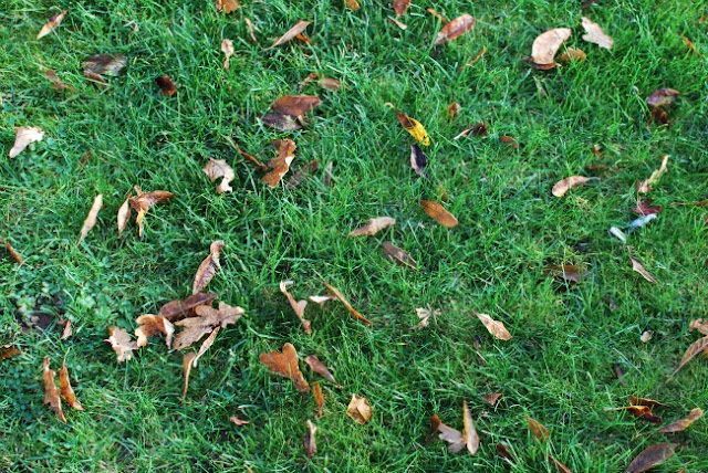 Oak leaves on grass