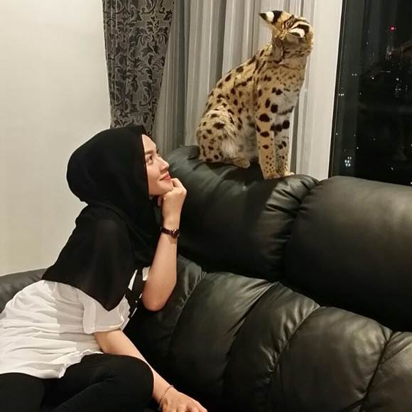 Niena Baharun Main Mata Dengan Savannah Cat