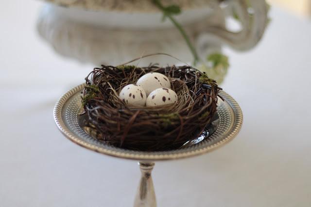 spring-tour-nest